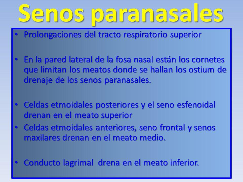Senos paranasales Prolongaciones del tracto respiratorio superior
