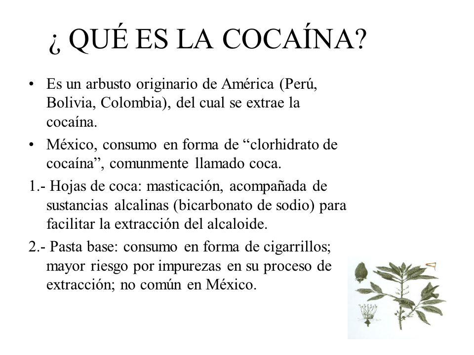 ¿ QUÉ ES LA COCAÍNA Es un arbusto originario de América (Perú, Bolivia, Colombia), del cual se extrae la cocaína.