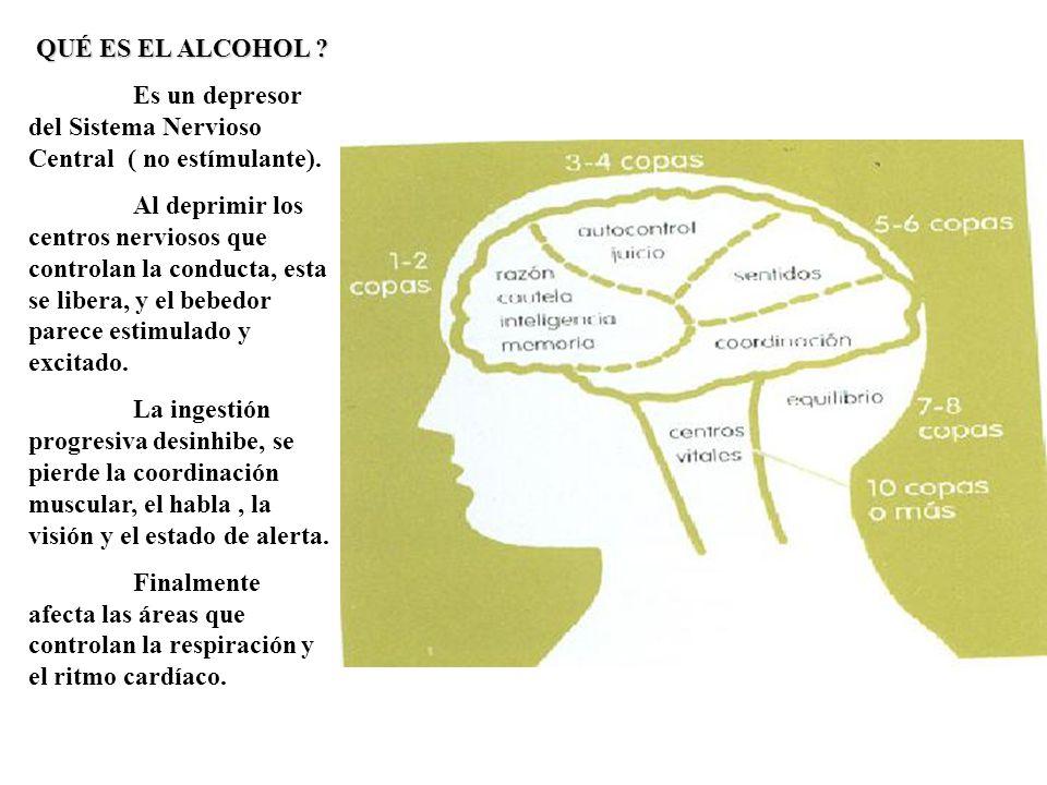 QUÉ ES EL ALCOHOL Es un depresor del Sistema Nervioso Central ( no estímulante).