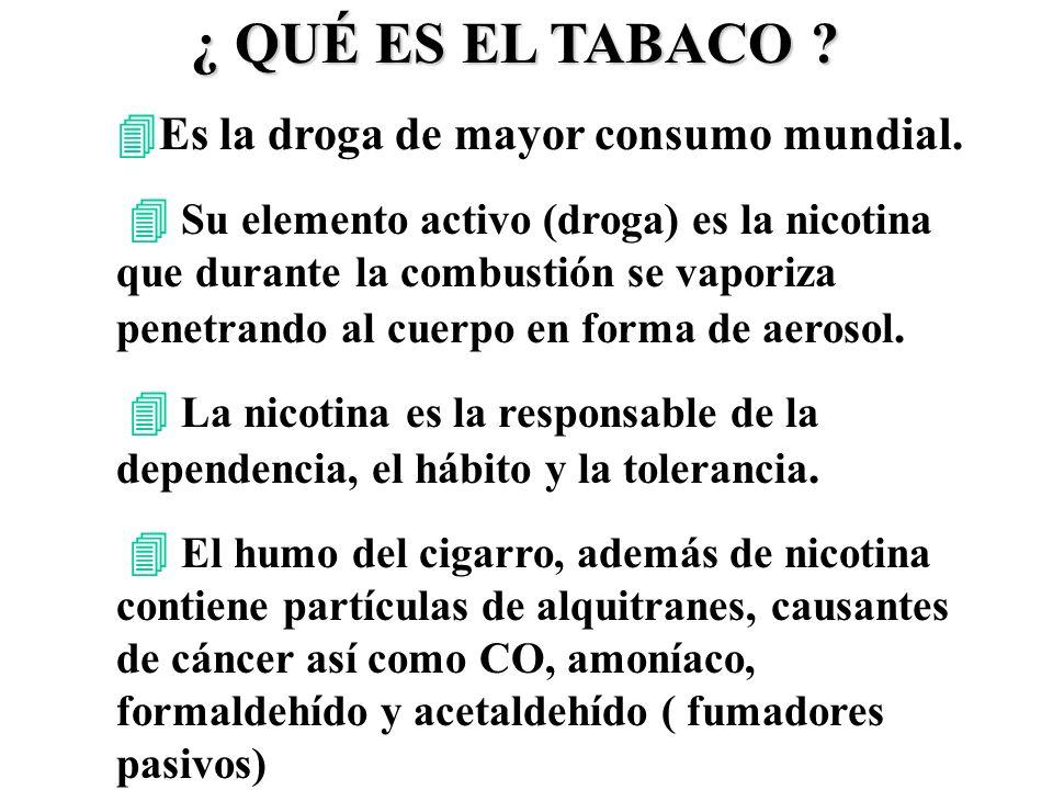 ¿ QUÉ ES EL TABACO Es la droga de mayor consumo mundial.