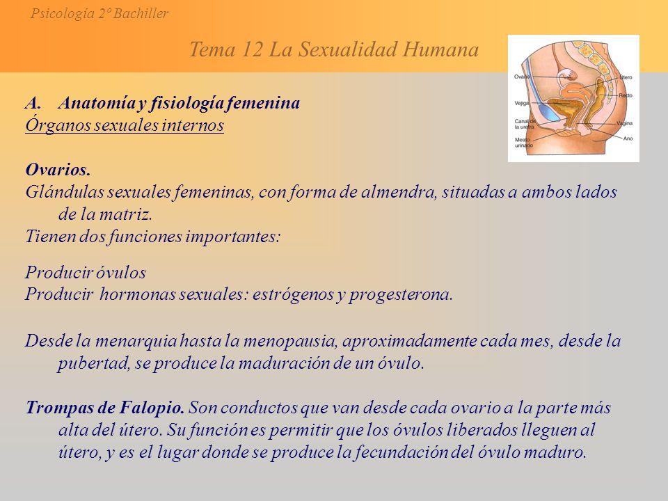 Anatomía y fisiología femenina