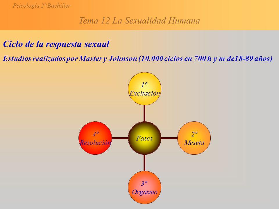 Ciclo de la respuesta sexual