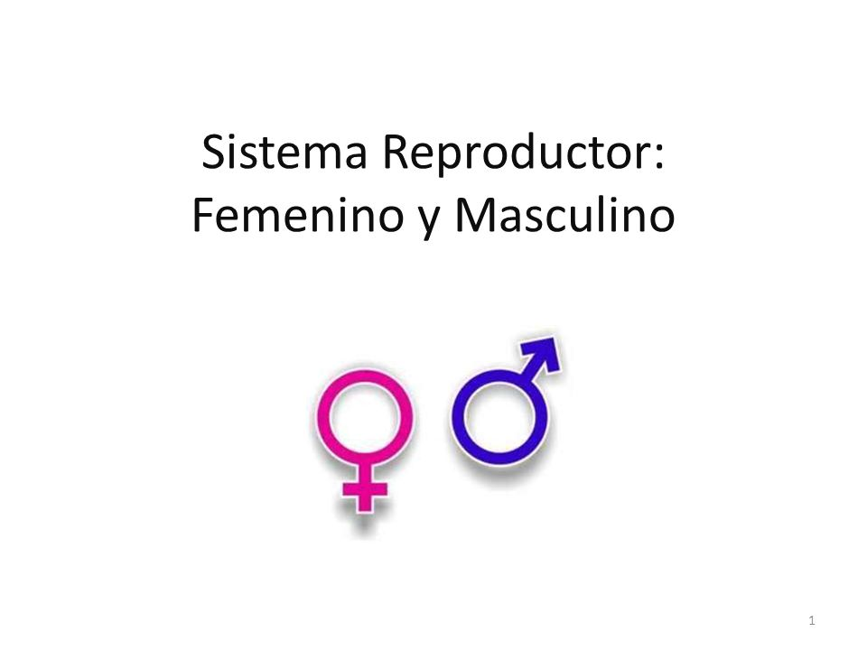 Sistema Reproductor: Femenino y Masculino