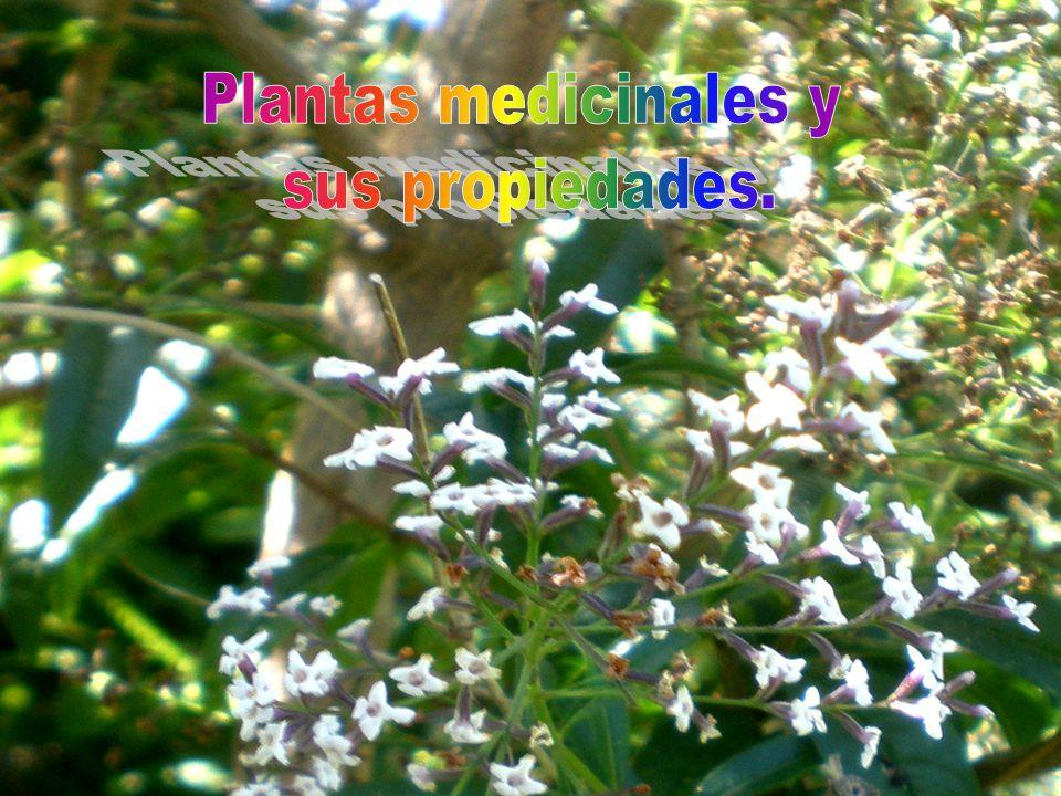 Plantas medicinales y sus propiedades ppt descargar for Planta decorativa propiedades medicinales
