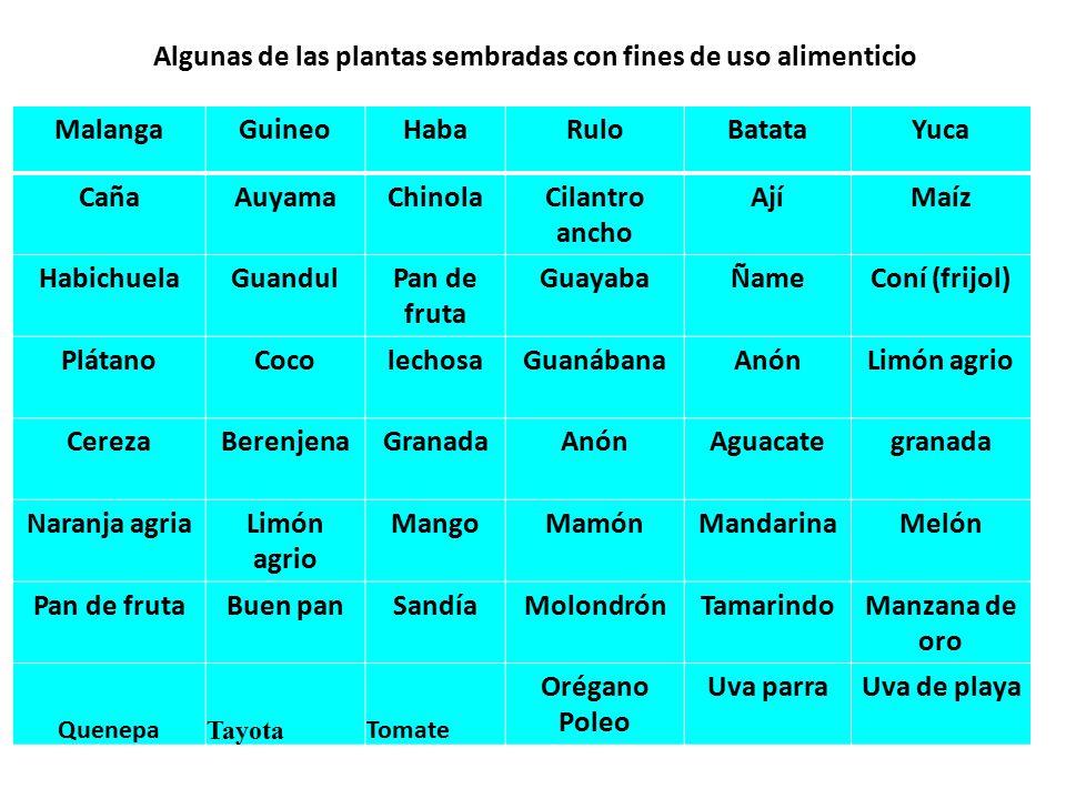 Algunas de las plantas sembradas con fines de uso alimenticio