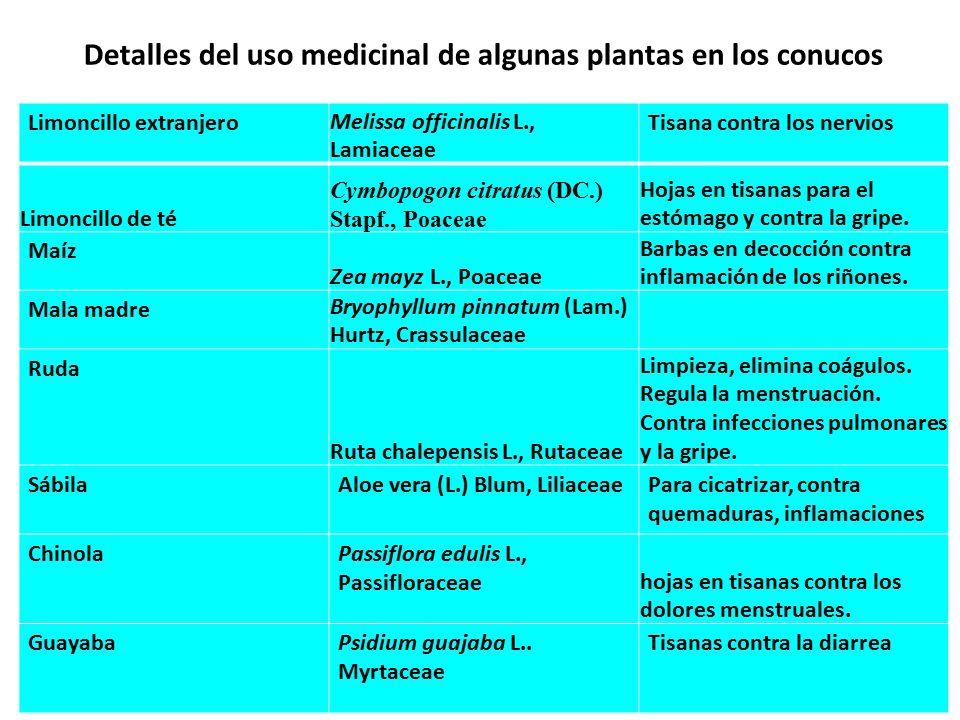 Detalles del uso medicinal de algunas plantas en los conucos