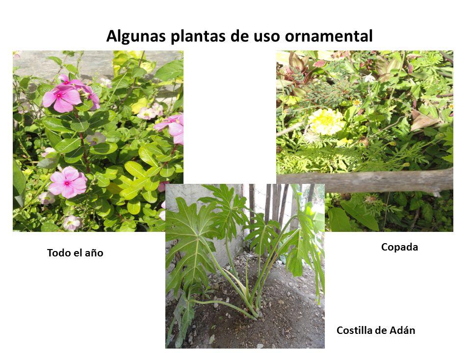 Algunas plantas de uso ornamental