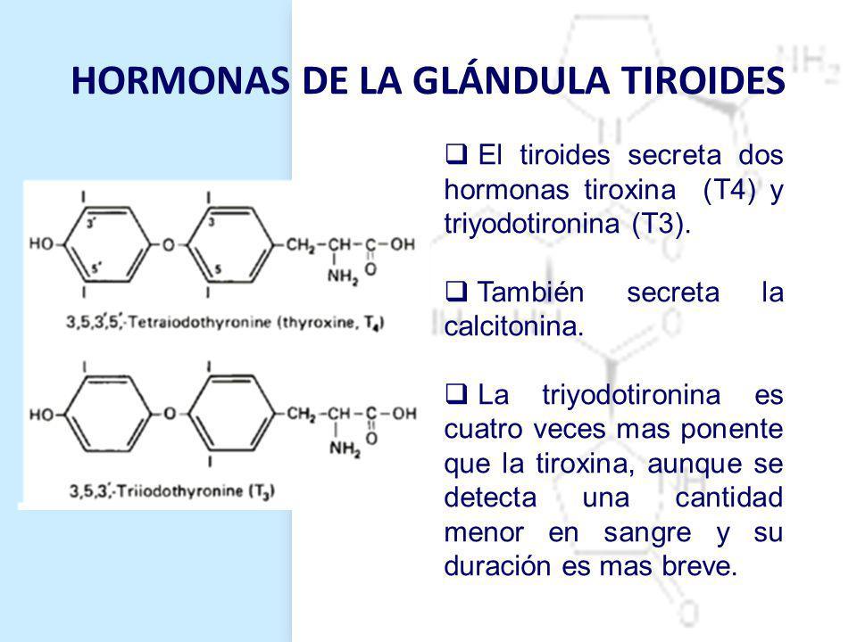 HORMONAS DE LA GLÁNDULA TIROIDES