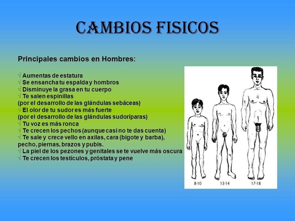 CAMBIOS FISICOS Principales cambios en Hombres: