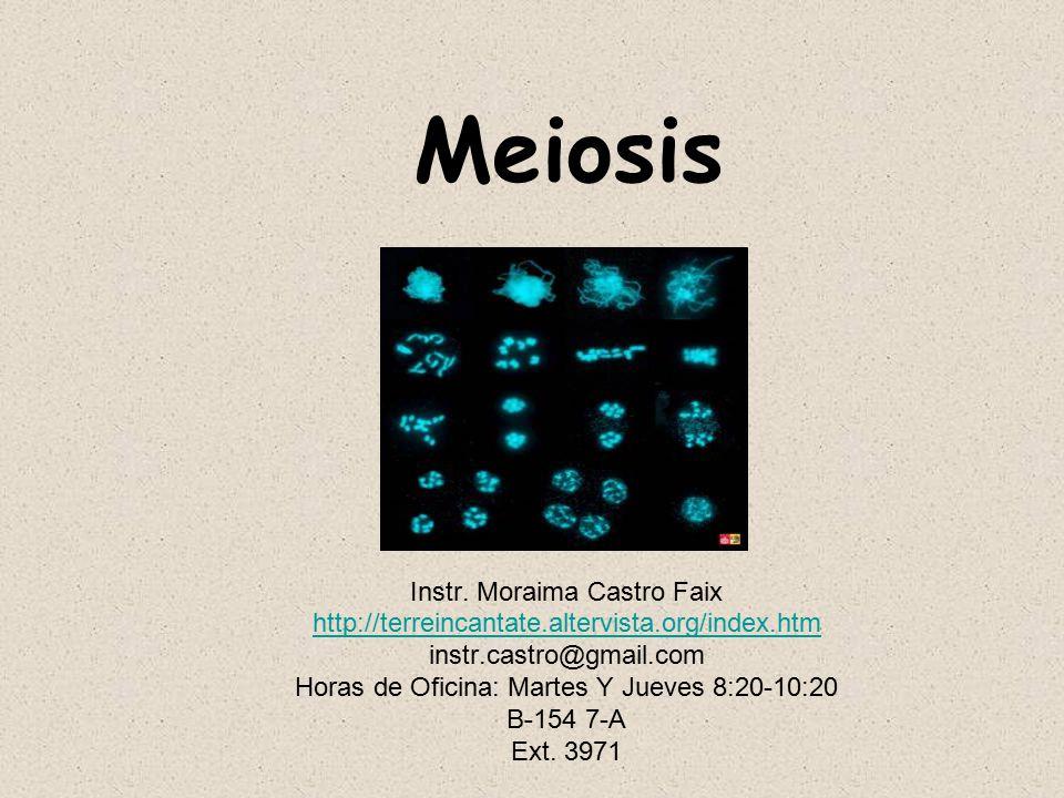 Meiosis Instr. Moraima Castro Faix