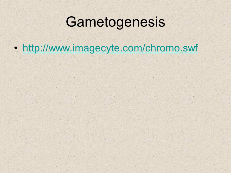 Gametogenesis http://www.imagecyte.com/chromo.swf