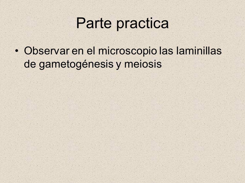 Parte practica Observar en el microscopio las laminillas de gametogénesis y meiosis