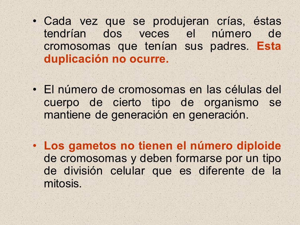 Cada vez que se produjeran crías, éstas tendrían dos veces el número de cromosomas que tenían sus padres. Esta duplicación no ocurre.