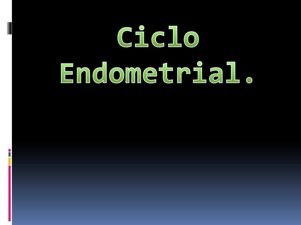 Ciclo Endometrial.