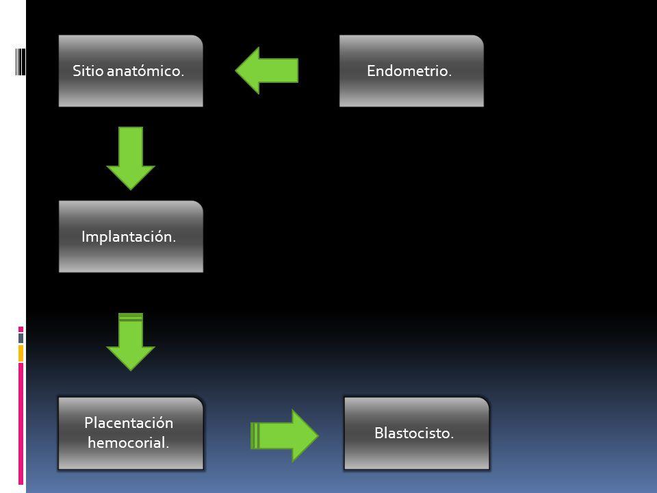 Placentación hemocorial.