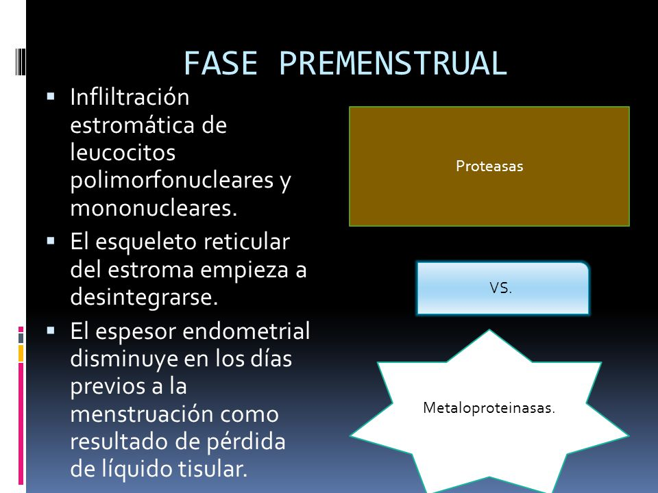 FASE PREMENSTRUAL Infliltración estromática de leucocitos polimorfonucleares y mononucleares.