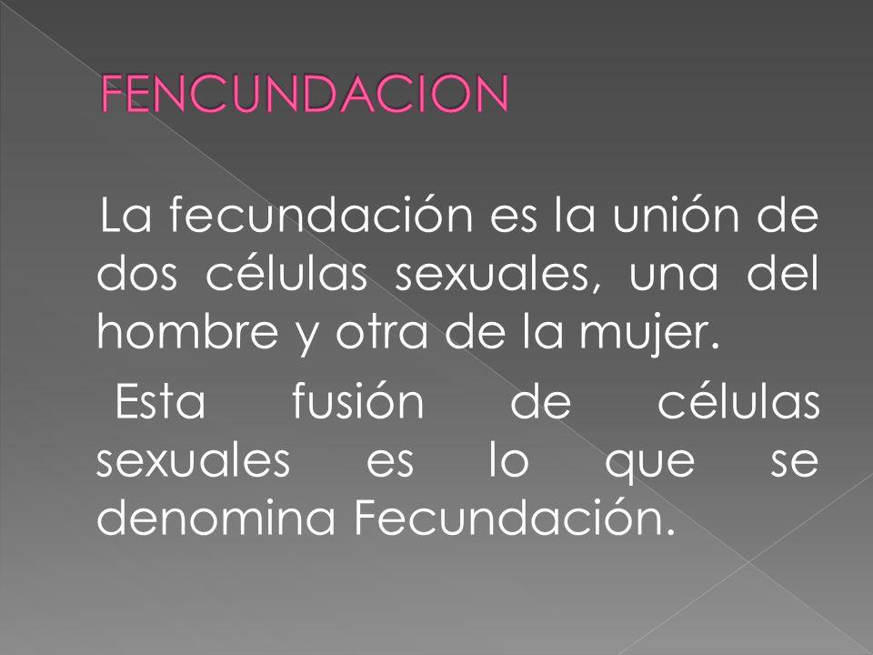 FENCUNDACION La fecundación es la unión de dos células sexuales, una del hombre y otra de la mujer.