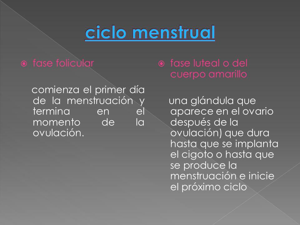 ciclo menstrual fase folicular