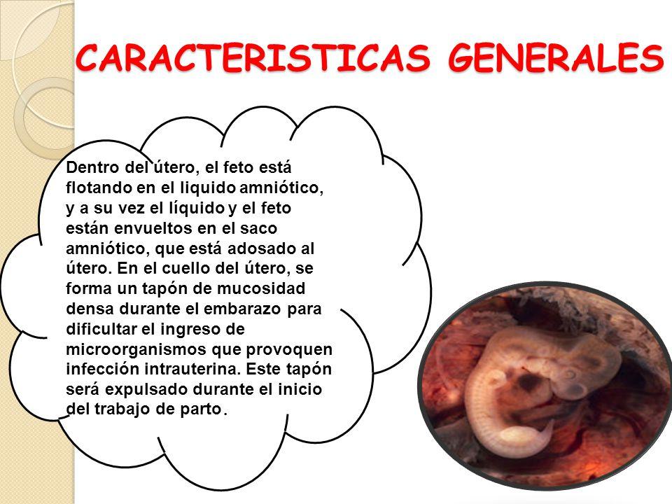 CARACTERISTICAS GENERALES