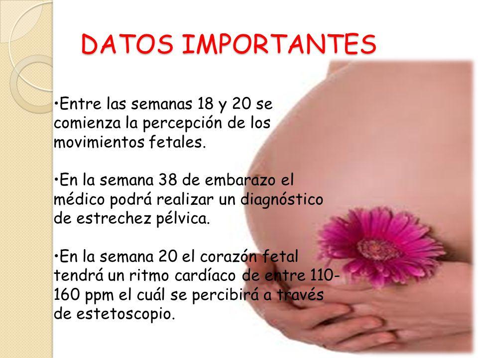 DATOS IMPORTANTES Entre las semanas 18 y 20 se comienza la percepción de los movimientos fetales.
