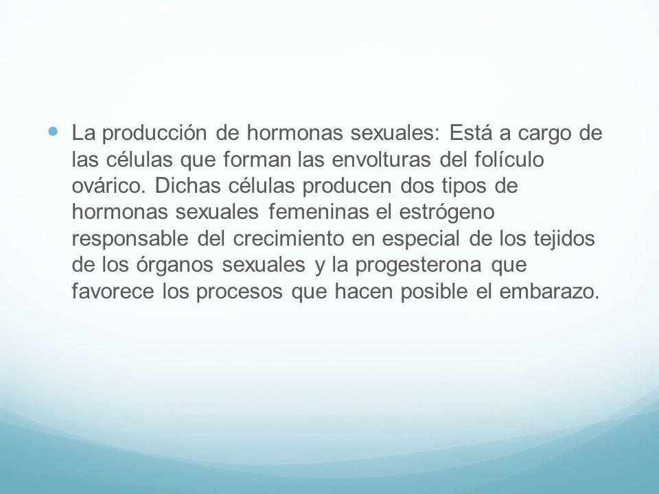 La producción de hormonas sexuales: Está a cargo de las células que forman las envolturas del folículo ovárico.