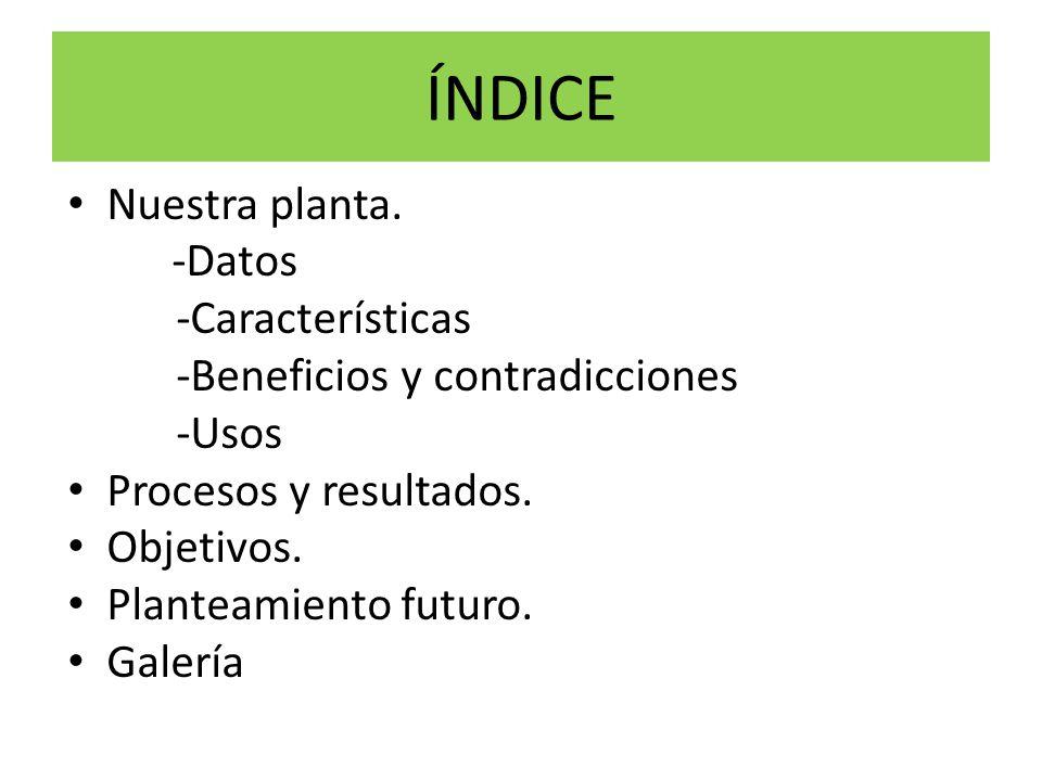 ÍNDICE Nuestra planta. -Datos -Características