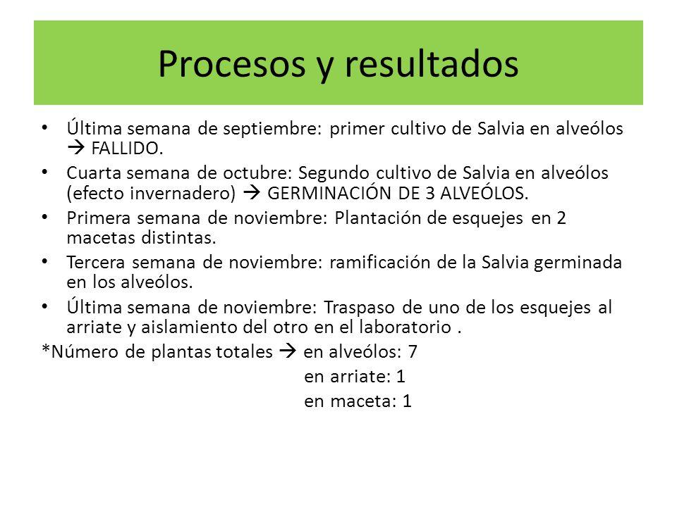 Procesos y resultados Última semana de septiembre: primer cultivo de Salvia en alveólos  FALLIDO.