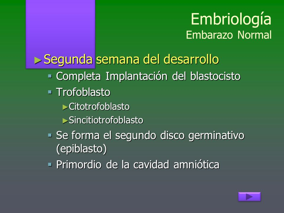 Embriología Embarazo Normal