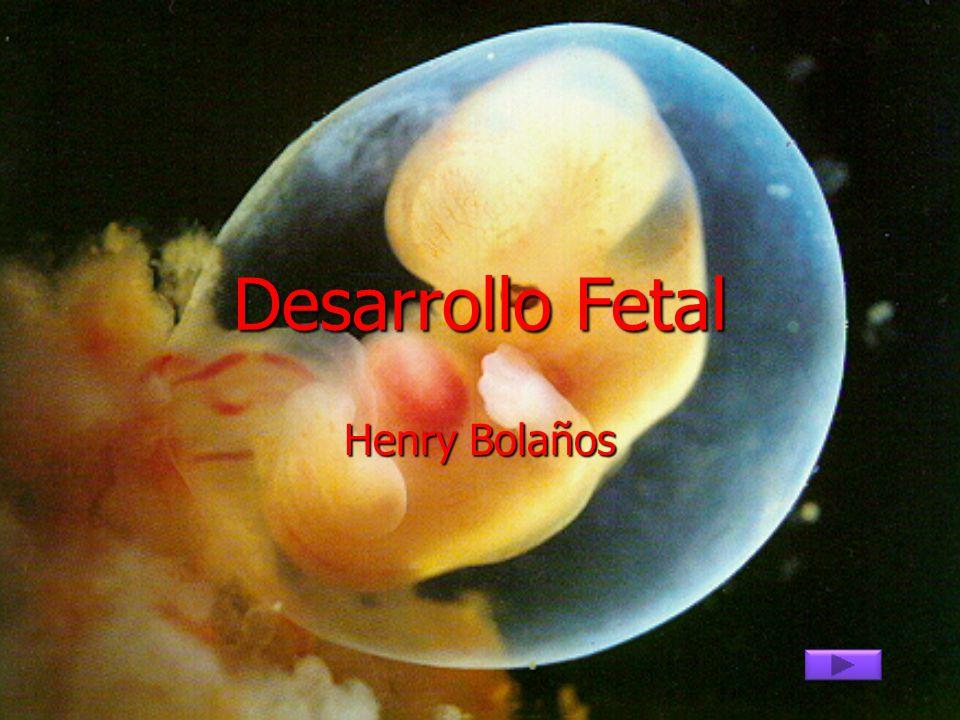 Desarrollo Fetal Henry Bolaños