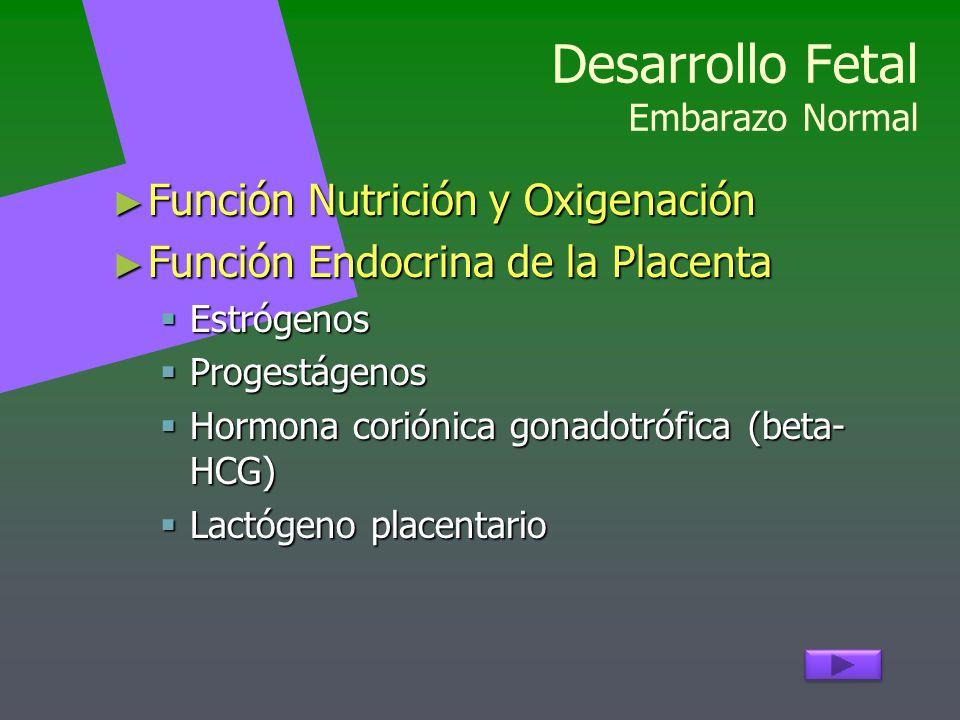 Desarrollo Fetal Embarazo Normal