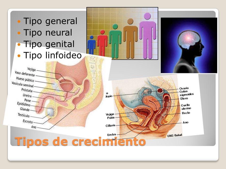 Tipos de crecimiento Tipo general Tipo neural Tipo genital