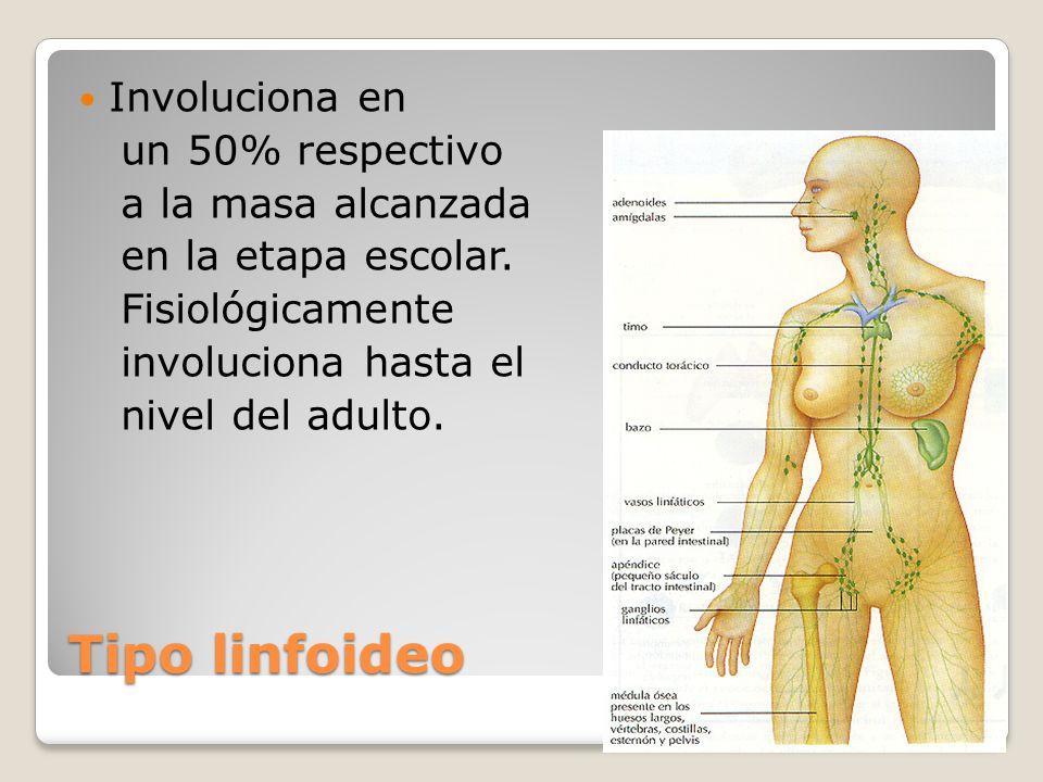 Tipo linfoideo Involuciona en un 50% respectivo a la masa alcanzada