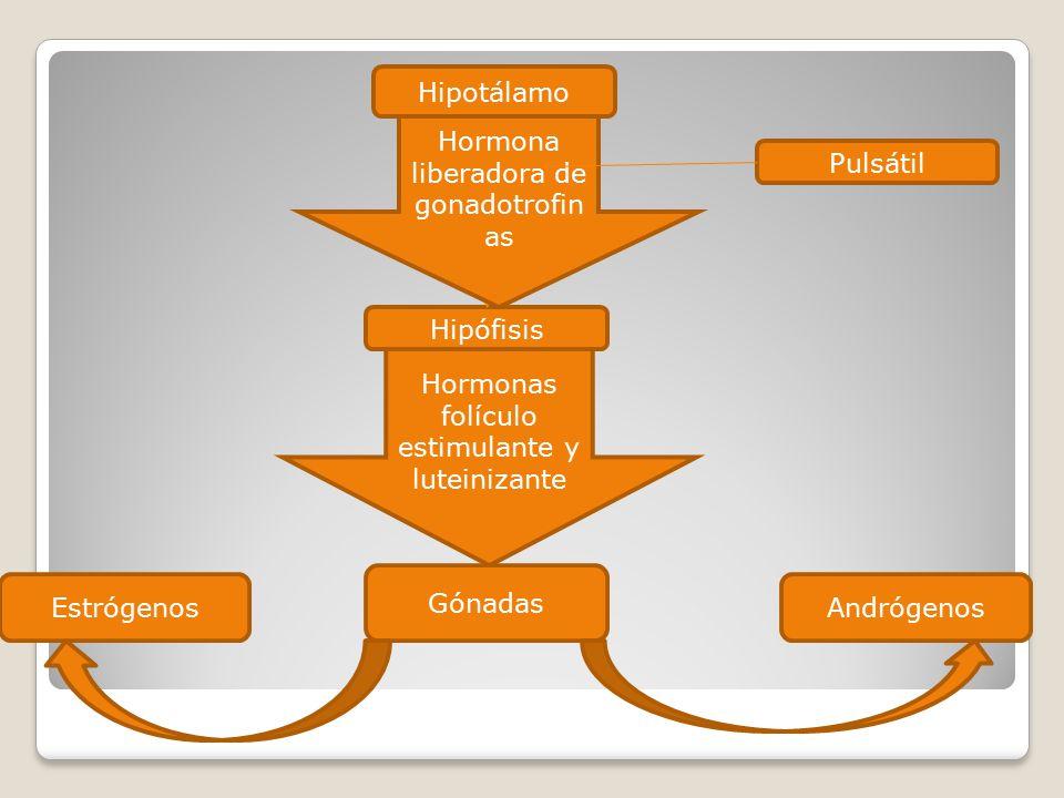 Hormona liberadora de gonadotrofinas Pulsátil