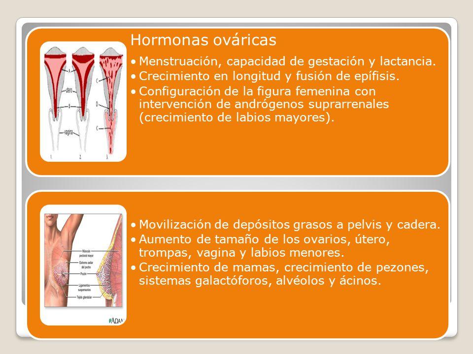 Hormonas ováricas Menstruación, capacidad de gestación y lactancia. Crecimiento en longitud y fusión de epífisis.