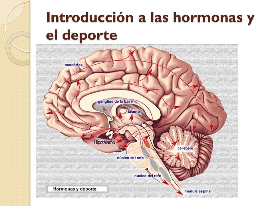 Introducción a las hormonas y el deporte
