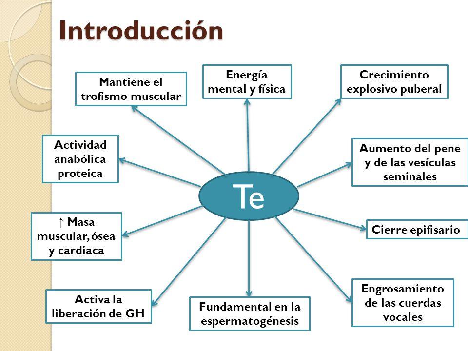 Te Introducción Energía mental y física