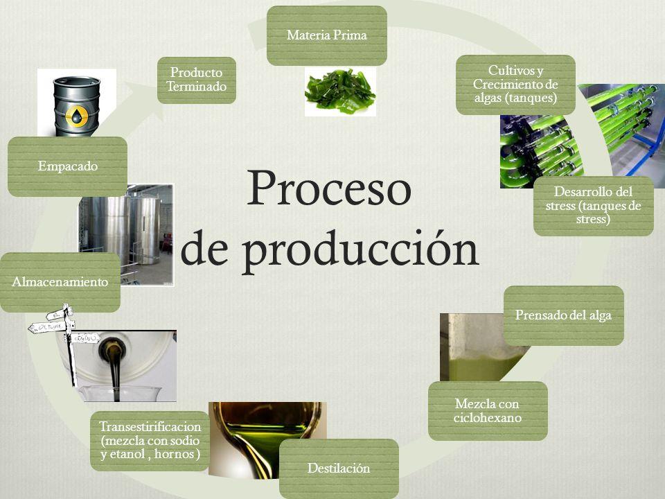 Proceso de producción Materia Prima