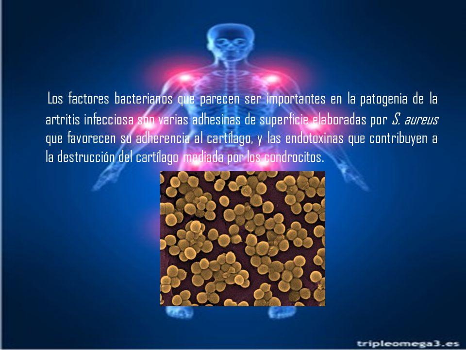 Los factores bacterianos que parecen ser importantes en la patogenia de la artritis infecciosa son varias adhesinas de superficie elaboradas por S.