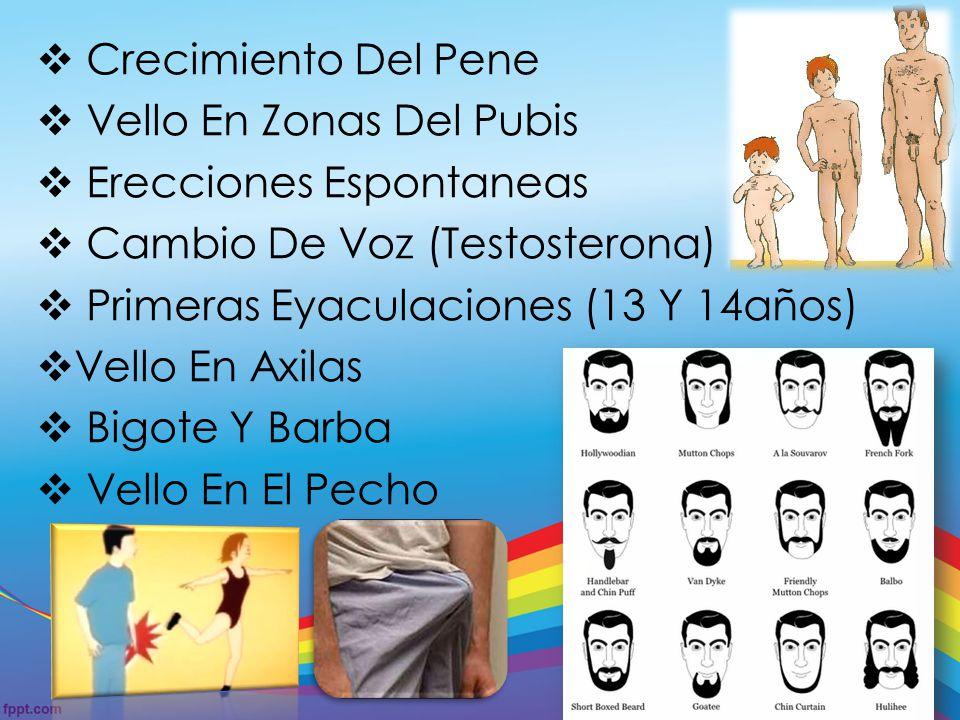 Crecimiento Del Pene Vello En Zonas Del Pubis. Erecciones Espontaneas. Cambio De Voz (Testosterona)