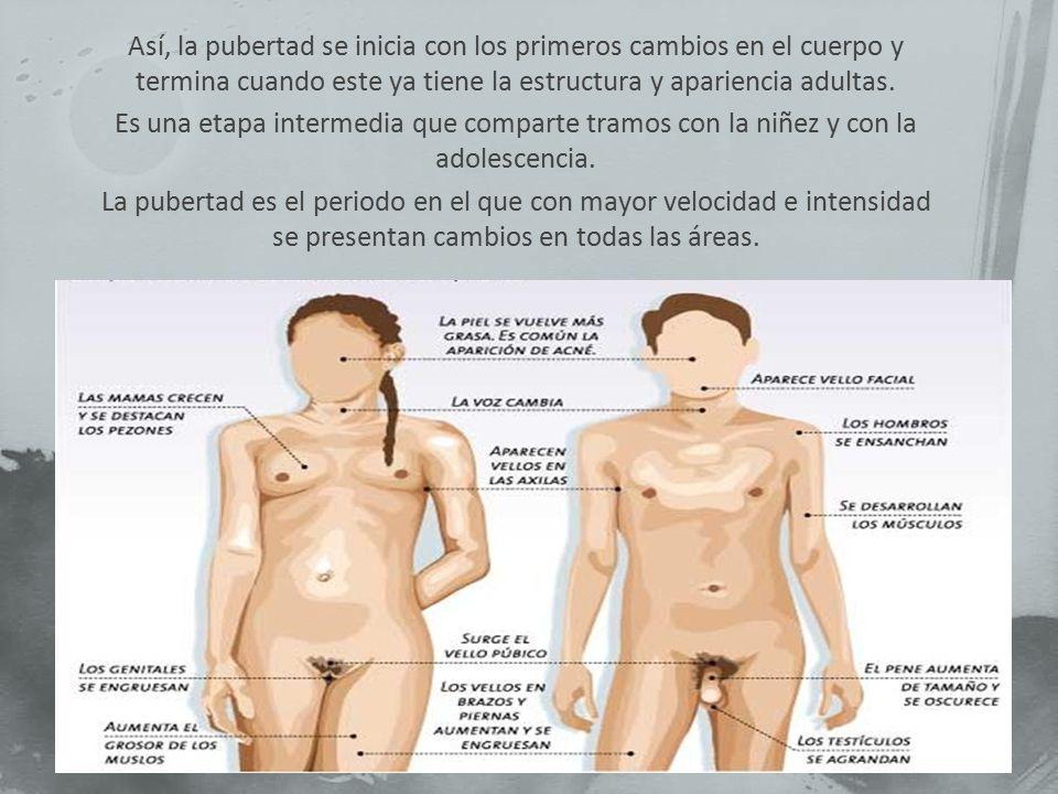 Así, la pubertad se inicia con los primeros cambios en el cuerpo y termina cuando este ya tiene la estructura y apariencia adultas.