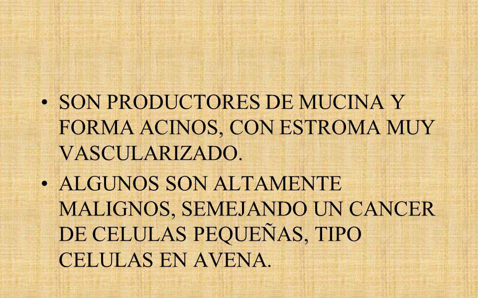 SON PRODUCTORES DE MUCINA Y FORMA ACINOS, CON ESTROMA MUY VASCULARIZADO.