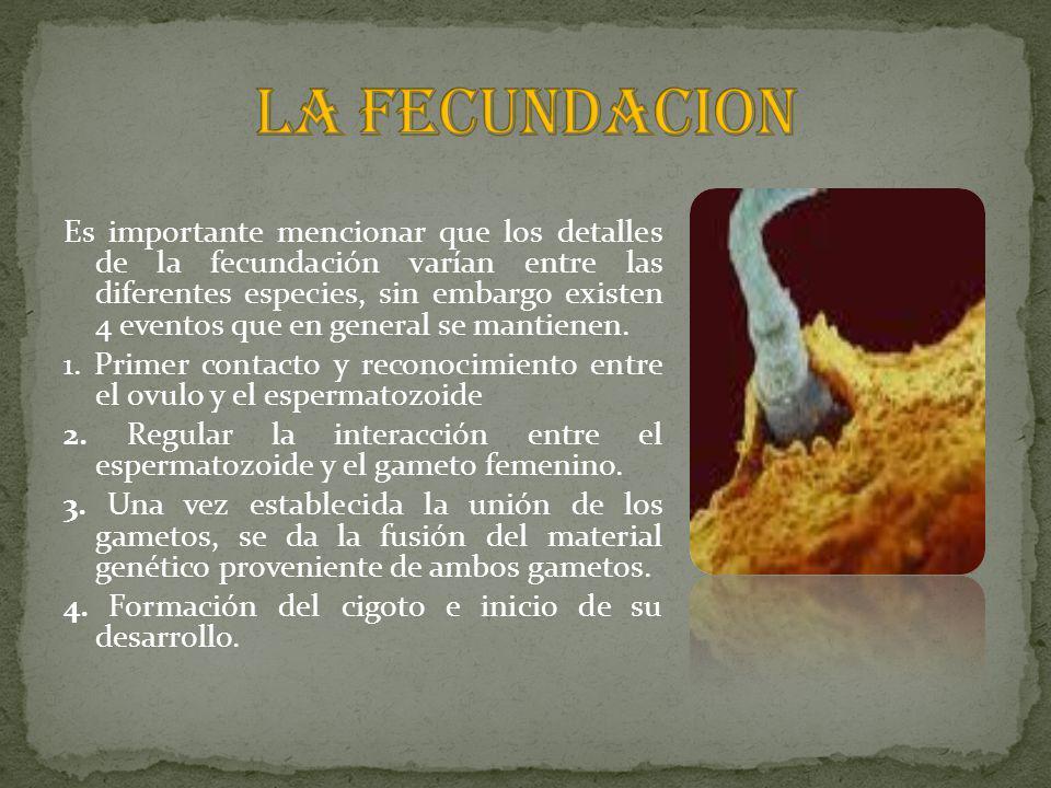 LA FECUNDACION