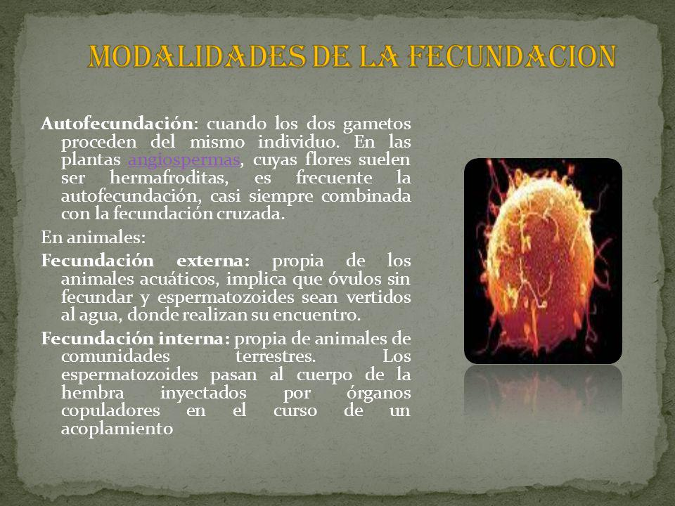 MODALIDADES DE LA FECUNDACION