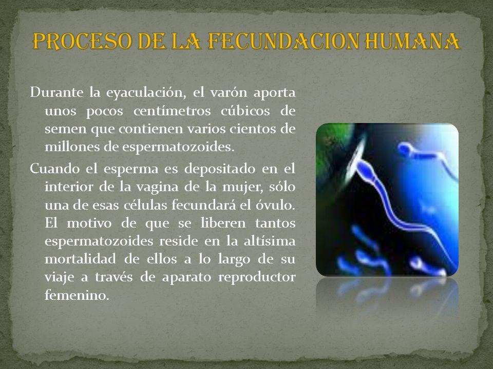 PROCESO DE LA FECUNDACION HUMANA