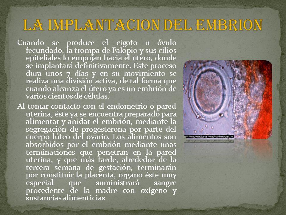 LA IMPLANTACION DEL EMBRION