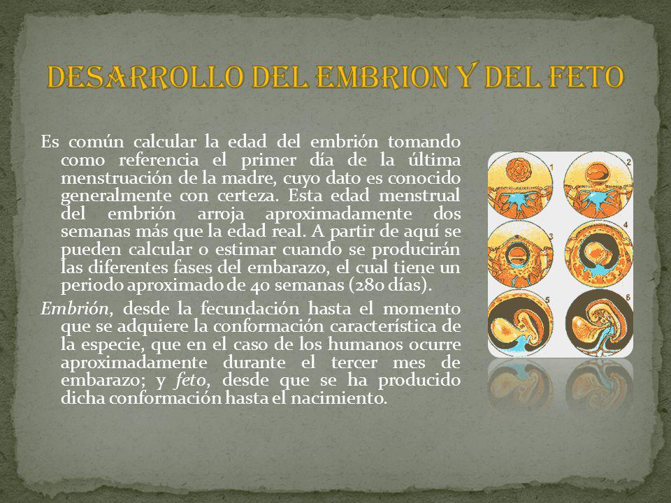 DESARROLLO DEL EMBRION Y DEL FETO