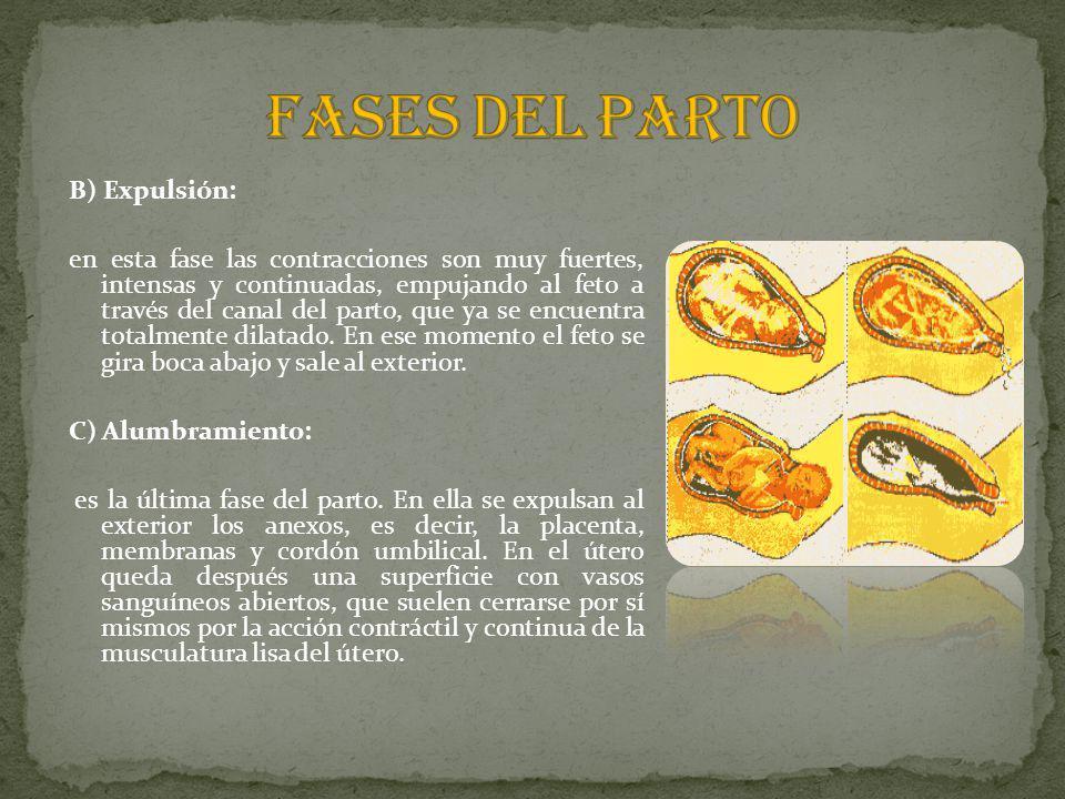 FASES DEL PARTO B) Expulsión: