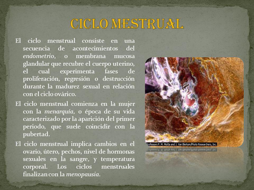 CICLO MESTRUAL