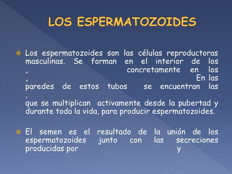 LOS ESPERMATOZOIDES