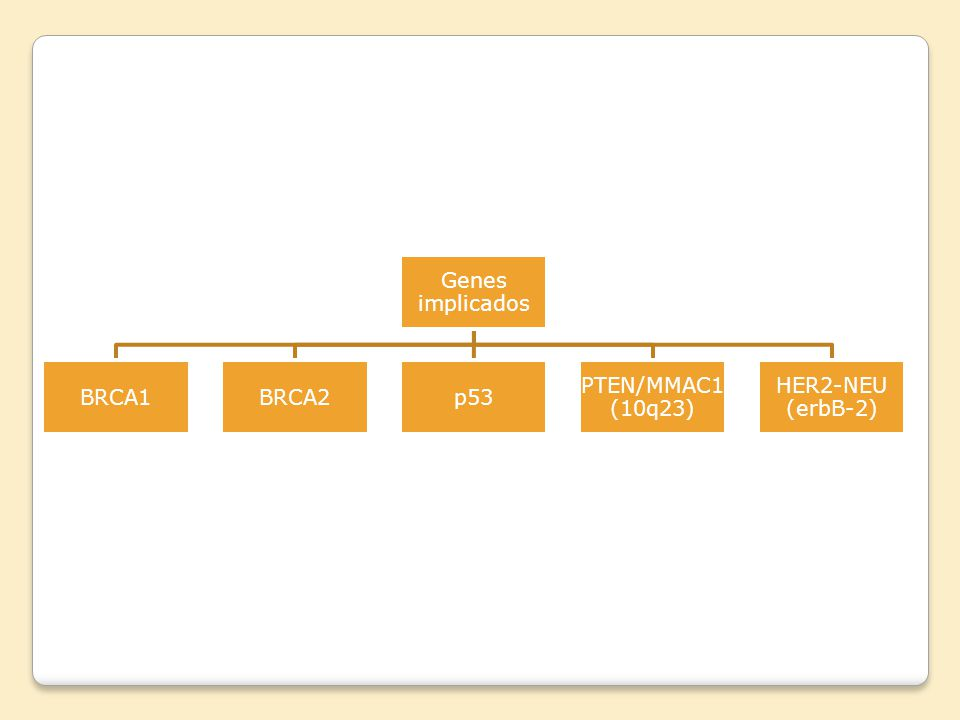 Genes implicados BRCA1 BRCA2 p53 PTEN/MMAC1 (10q23) HER2-NEU (erbB-2)